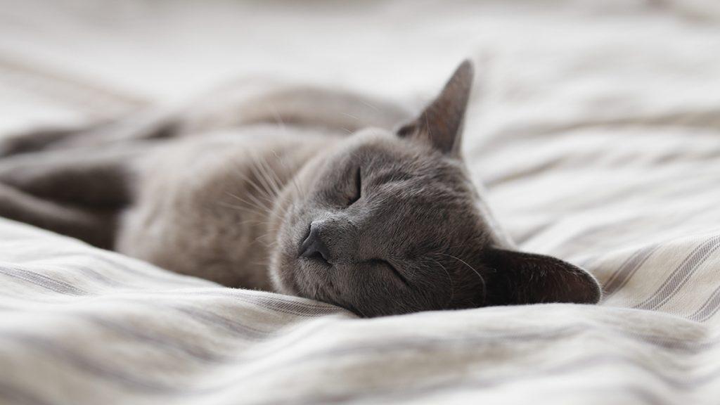 Huisdieren in de slaapkamer : 3 redenen waarom niet